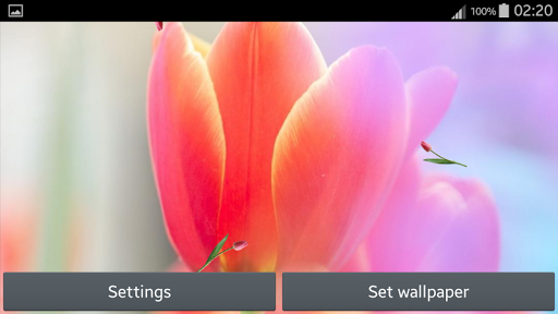 玩個人化App|鬱金香動畫壁紙免費|APP試玩