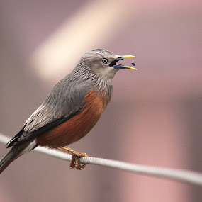 Will it or Will it not by Mrinmoy Ghosh - Animals Birds (  )