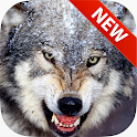 Wolf Wallpapers icon