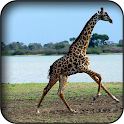 Giraffe Wallpapers icon