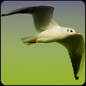 Bird Songs icon