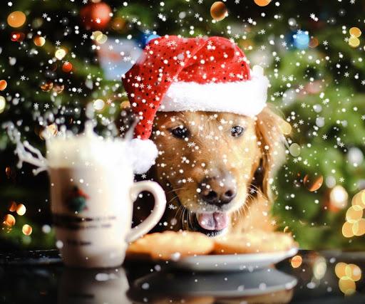 狗狗圣诞壁纸