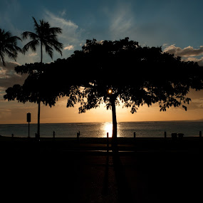 The perfect end to a perfect day by Larry Crawford - Landscapes Sunsets & Sunrises ( tree, silhouette, sunset, beach, places, hawaii,  )