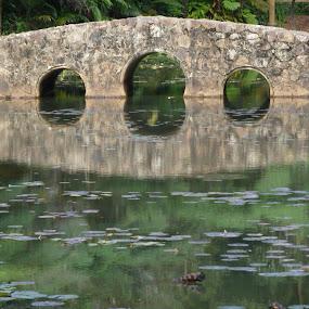 Calm  by Di Mc - Novices Only Landscapes ( calm, green, bush, trees, lake, mirror image, bridge,  )
