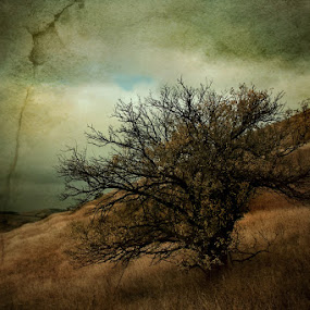 hopeless by Nicu Hoandra - Digital Art Abstract ( hill, tree, autumn, colours )