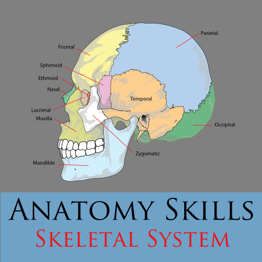 Anatomy Skills - Bones 教育 App LOGO-APP開箱王