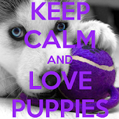Keep Calm And Love PUPPIES iHD