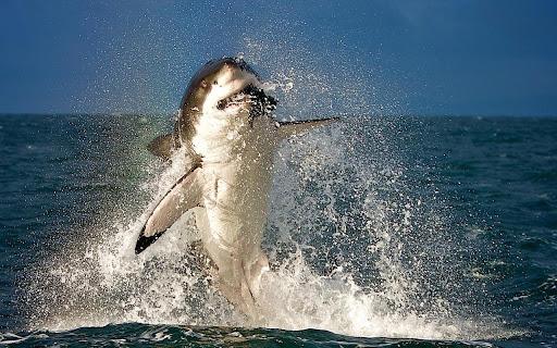 На акулы живые обои андроид