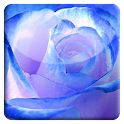 Blue Rose HD LiveWallpaper icon