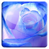 Blue Rose HD LiveWallpaper