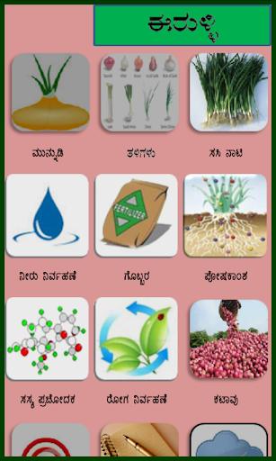 Onion Kannada