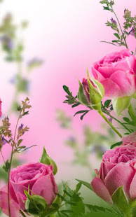 Pink flowers live wallpaper apps on google play screenshot image mightylinksfo