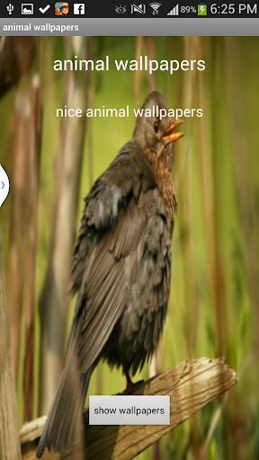 玩攝影App|3- Animals wallpapers 2014免費|APP試玩