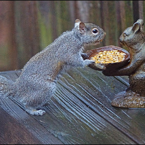 Squirrel at Squirrel Feeder by Joseph T Dick - Animals Other