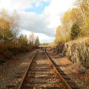 Old Train Tracks by Sandy Davis DePina - Transportation Railway Tracks ( river train tracks clouds fall dogs dog walk, , path, nature, landscape )