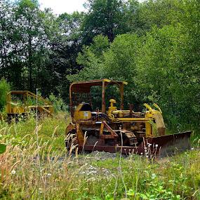 Little Big Cats by Art Straw - Transportation Other ( cat, bulldozer, equipment, caterpillar, rust, construction,  )