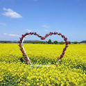 Jeju Island Scenery Wallpaper icon