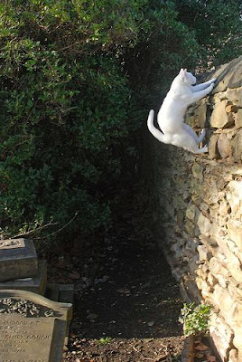 cat jumping up a wall