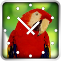 Birds Clock icon