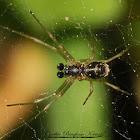Platform Spider