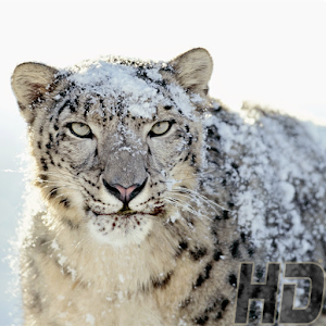 All Animal Wallpaper 2015 for Android