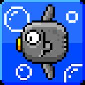 Annoying mola mola
