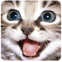 Cute Cats Daily Wallpaper logo
