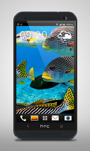 Flock of Colorful Fish Live WP