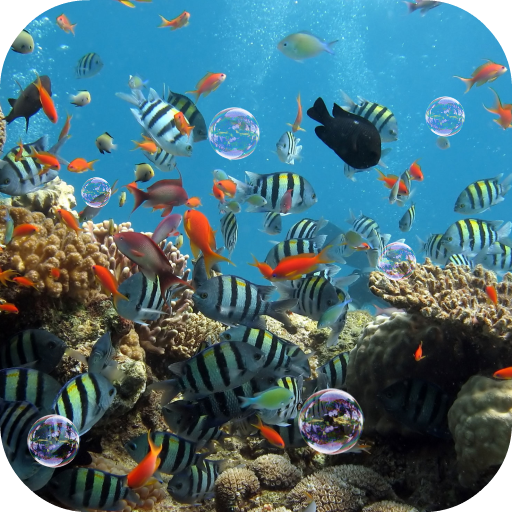 Aquarium Live Wallpaper Apps Bei Google Play