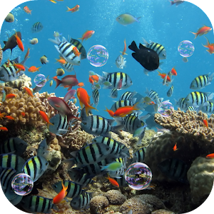 Aquarium Live Wallpaper 個人化 App LOGO-硬是要APP
