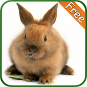 Rabbit+ Free