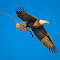 Nest-Materials-Flight.jpg