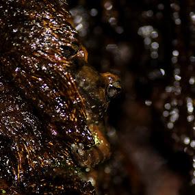 Eye View Of Frog by Aniket Karane - Animals Amphibians ( frog, crevice, arboreal, tree trunk, frog eyes )