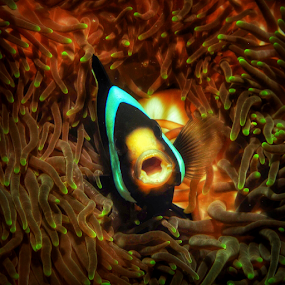 Hello by Asep Dedo - Animals Fish
