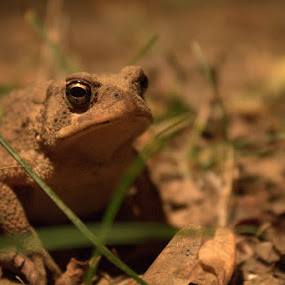 by Sarah Benoit Weir - Novices Only Wildlife ( toad,  )