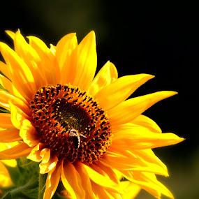 by Olivera Prelevic Tanasic - Flowers Single Flower