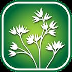 Okanogan Co. Wildflowers icon