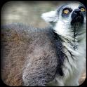 Lemur Wallpapers icon