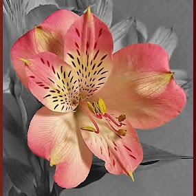 Clarity by Diana Postill - Flowers Flower Arangements ( colour, arrangement, nature, flower, closeup )