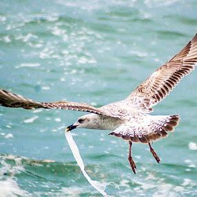 by Adrian Marin - Animals Birds
