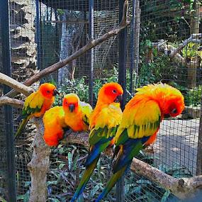 by Merah Putih - Animals Birds
