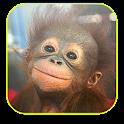 Baby Monkey Live Wallpaper icon