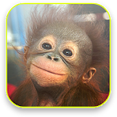 Baby Monkey Live Wallpaper