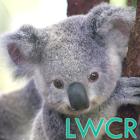 bébé koala lwp icon