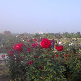 ROSE @ RAJARHAT by Jayita Mallik - Flowers Flower Gardens