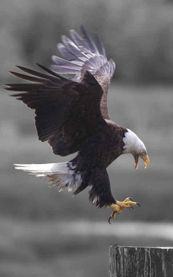 Eagle Eye Adventures - Android Apps on Google Play