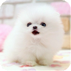 Lovely Pet  Lwp icon