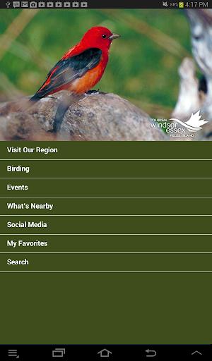 Birding in Windsor Essex