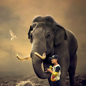 A Little bird & My Friend by Juprinaldi Photoart  - Digital Art People ( child                   boy                       bird                    elephant                  rock                  trees )