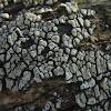 Ceramic Fungus